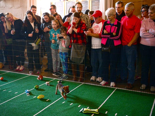 The crowd watches as puppies play with toys during
