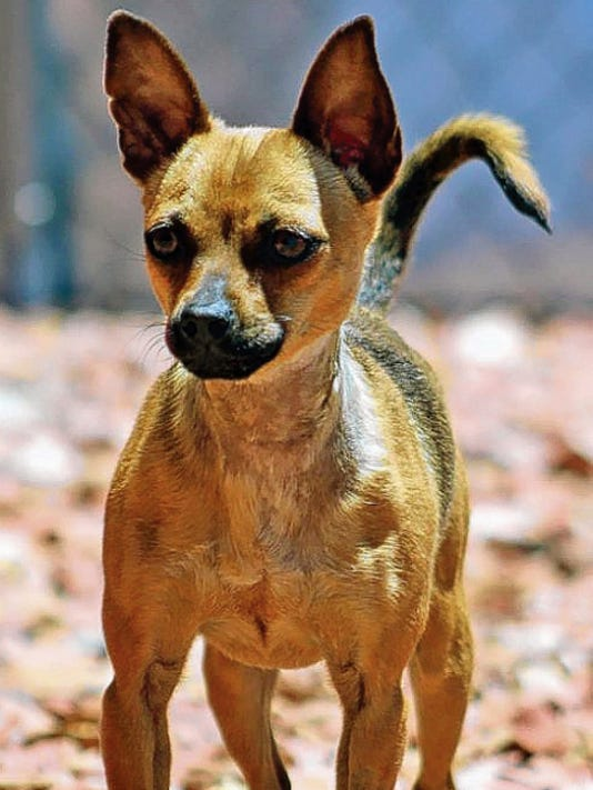 Chicka is available for adoption through From the Heart Animal Rescue.