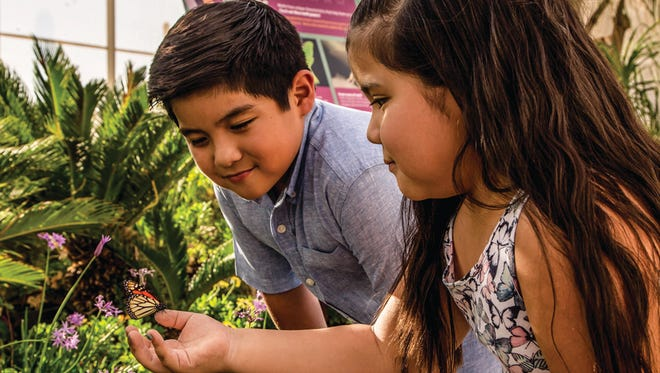 The Spring Butterfly Exhibit will be at the Desert Botanical Garden from Feb. 24-March 13.