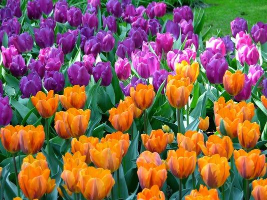 Gardening-Fragrant Tu_Gobl.jpg