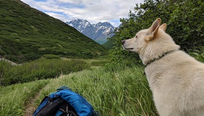 A picture Amelia Milling took of Nanook during their adventure in Alaska.
