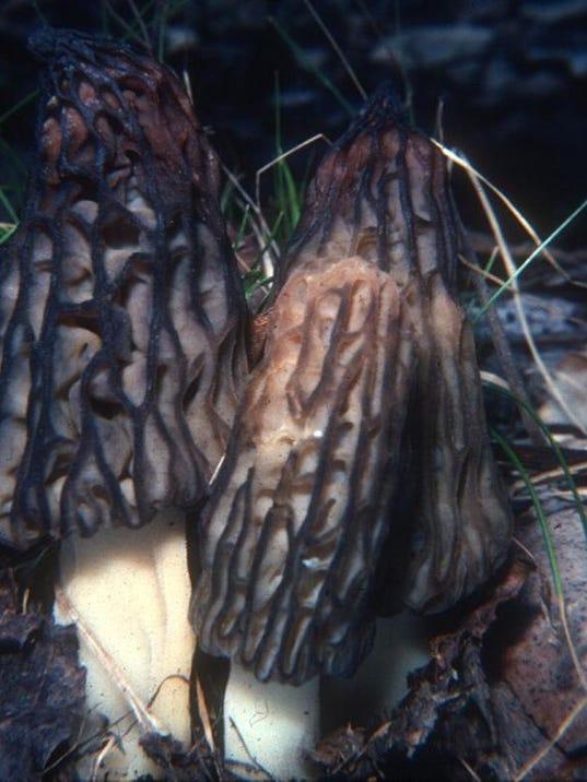 2 MNCO 0420 Mushroom Enterprise 2.jpg