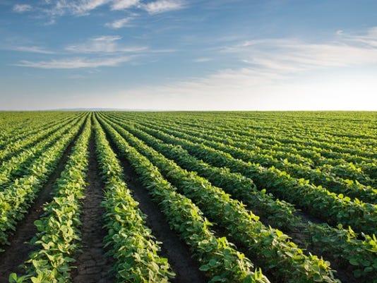 299-soybean-field_large.jpg