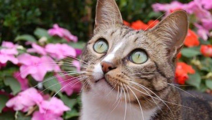 Joey the Garden Cat, 2007-2014