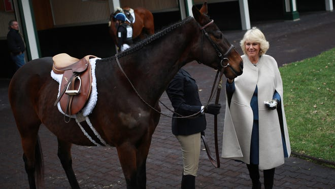 Camilla pets a thoroughbred horse in the paddock at Churchill Downs, home of the Kentucky Derby.
