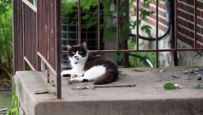 A cat lounges on the back porch of a home at 4209 Delmar Court, St. Bernard.  A Hamilton County Public Health Inspector recently observed 19 feral cats outside the residence, which is vacant.