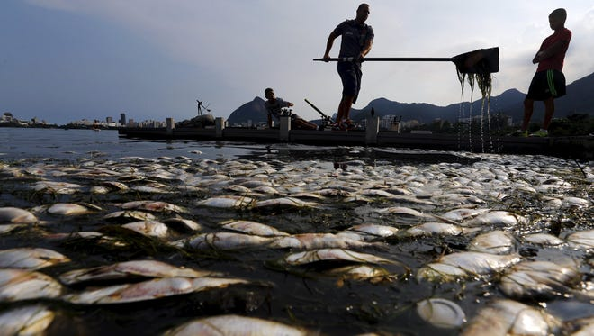 Dead fish are pictured next to a rower as his coach helps him clean his paddle during a training session at the Rodrigo de Freitas lagoon, in Rio de Janeiro.