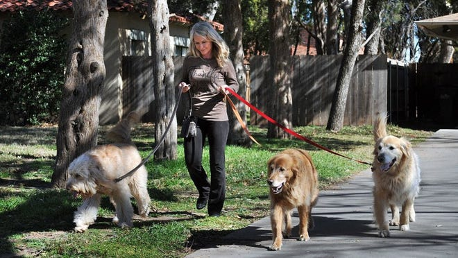 Kelli Jordan, owner of For the Love of Paws, walks a client's dogs. The city is considering some changes to the animal ordinance. After approval from the animal shelter advisory committee, the next stop for approval is the public health board. If the changes are approved there, the ordinance will then go before council for final approval.