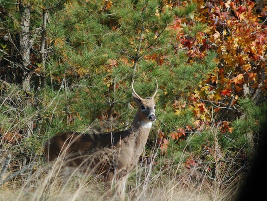 636136745456299820-deer-pictures-11-14-2014-209.JPG