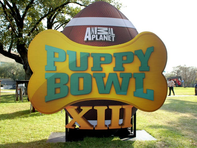 A general view the Puppy Bowl in Root Square Park during