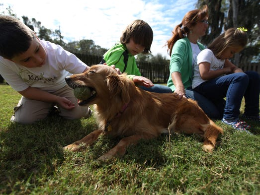 Therapy Dog Training Fort Myers Florida