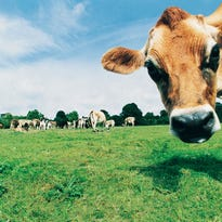 Farmers to talk healthy meat at Slow Food dinner