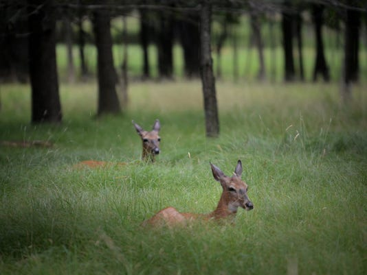 636337350479554295-deer.JPG