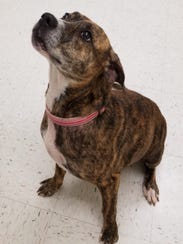 Amy is a 4-year-old terrier mix who is a super sweet