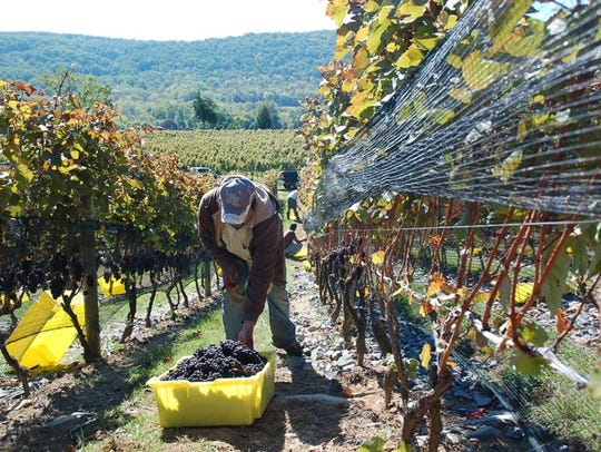 Alba Vineyard in Finesville will hold its annual Mother's
