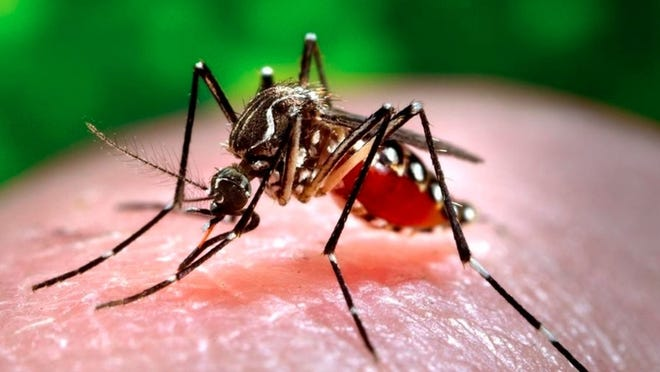 A recently passed Massachusetts Senate bill looks to update the state's approach to mosquito control.