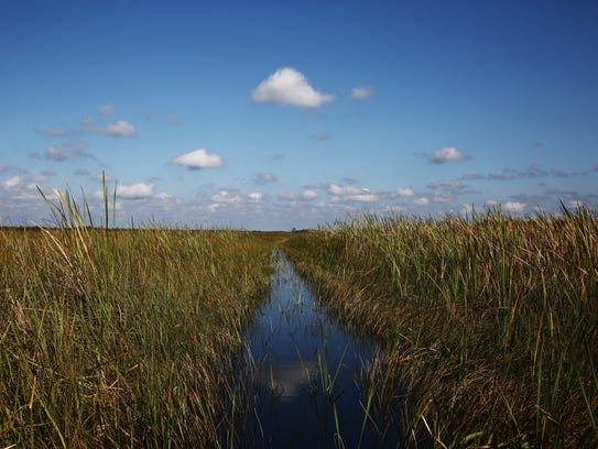 The view from an airboat in the Everglades National