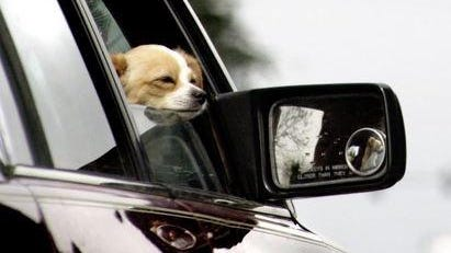 People seem to be aware of the risks associated with animals in cars on very hot days, said Lt. Dave Okada, of the Salem Police Department. It's the psuedo-hot days that pose more of a risk because of lack of awareness.