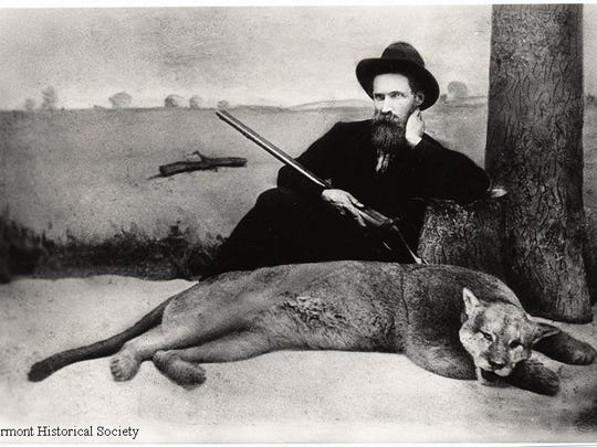 The Vermont Legislature established bounties on wolves and mountain lions in 1787, and within less than a century the species was exterminated from Vermont. This photo shows the last mountain lion killed in the state in 1881. The man in the photo is Alexander Crowell. The catamount depicted in the photo was mounted and is on view at the Vermont History Museum in Montpelier.