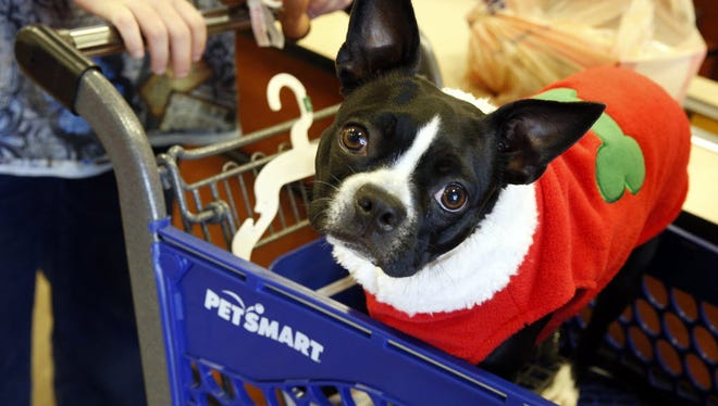 Mia, a Boston Terrier, shops with her pet parent for holiday treats during PetSmart's annual in-store event at a Dallas area PetSmart on Saturday, Dec. 6, 2014.