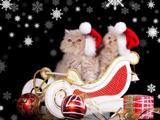 holiday pets.jpg