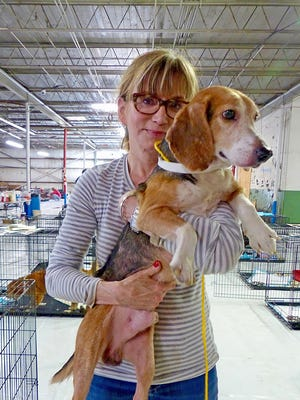 Carrie Moreland holds a beagle surrendered from property in Canton.