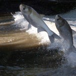 Letter to President Trump: Keep GLRI funding, build wall for Asian carp