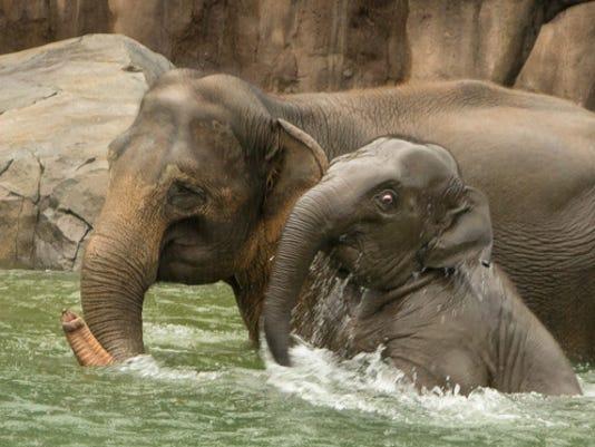 635856951692127256-ElephantSwim.jpg