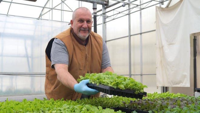 Growers have been growing flats of salad greens for months - readying the tender plants for customers.