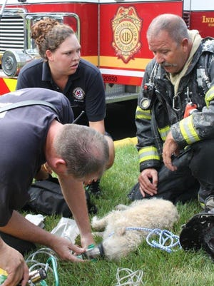 Indianapolis firefighters are shown reviving this dog named Tommy, who was rescued from a fire on Saturday, Aug. 15, 2015, at Harbour Isle Condominiums on Indianapolis' Northeastside.