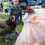 PHOTOS: Prettiest Chicken Contest