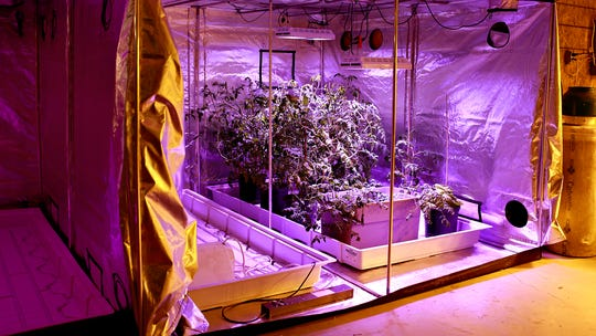 Five-Leaf Remedies grows vegetables in a hydroponic