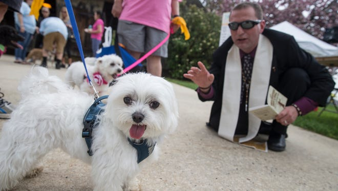 Clark, a Maltese owned by Jill Bergmann of Brick, receives a blessing from Matty Giuliano, Chaplain of Monmouth County SPCA. Monmouth County SPCA 2017 Dog Walk & Pet Fair gets underway at Brookdale Community College. Lincroft, NJSaturday, April 29, 2017@dhoodhood