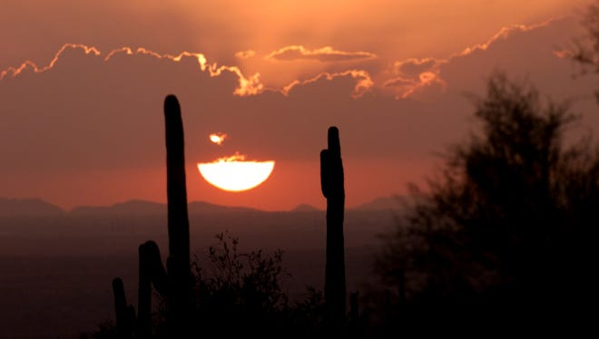 A cactus is silhouetted against a setting sun.