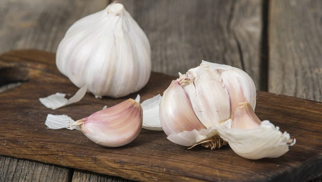 Garlic is a versatile ingredient used in a variety of dishes. Raw, packs a pungent punch. Roasted, mellows the flavor, giving it a sweeter taste.