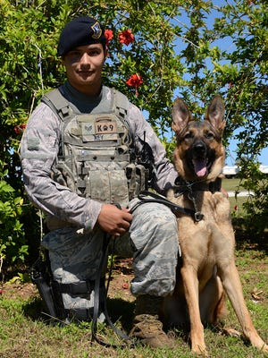 Staff Sgt. Mario Rey, 36th Security Forces Squadron military working dog handler, kneels with his partner Gezu Jan. 14, 2016, at Andersen Air Force Base, Guam. Rey and Gezu were among the team members that recently responded to an incident that occurred off-base at a local high school, which involved authorities from the community as well as the K-9 unit and Explosive Ordnance Disposal flight from Andersen.