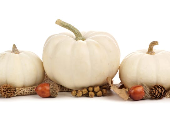 White pumpkins mixed with other natural elements like
