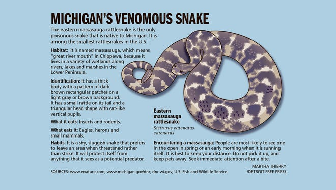 Michigan's venomous snake is now federally protected.