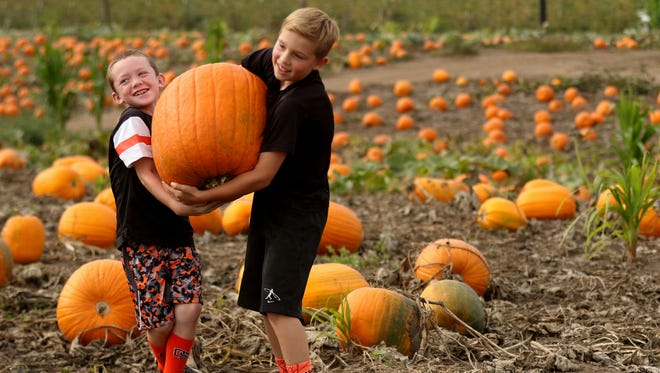 Friends E.J. Rubesh, 8, left, and Colin Cordle, 9, both of Albany, try to carry a pumpkin during the Harvest Festival at Greens Bridge Gardens in Jefferson.