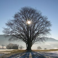 Winter best time to examine trees for structural problems