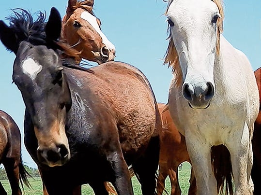 Courtesy Photo   The Bureau of Land Management (BLM) will host a wild horse and burro adoption on Aug. 7-8 at Southwest Horseman's Association Rodeo Arena in Silver City.
