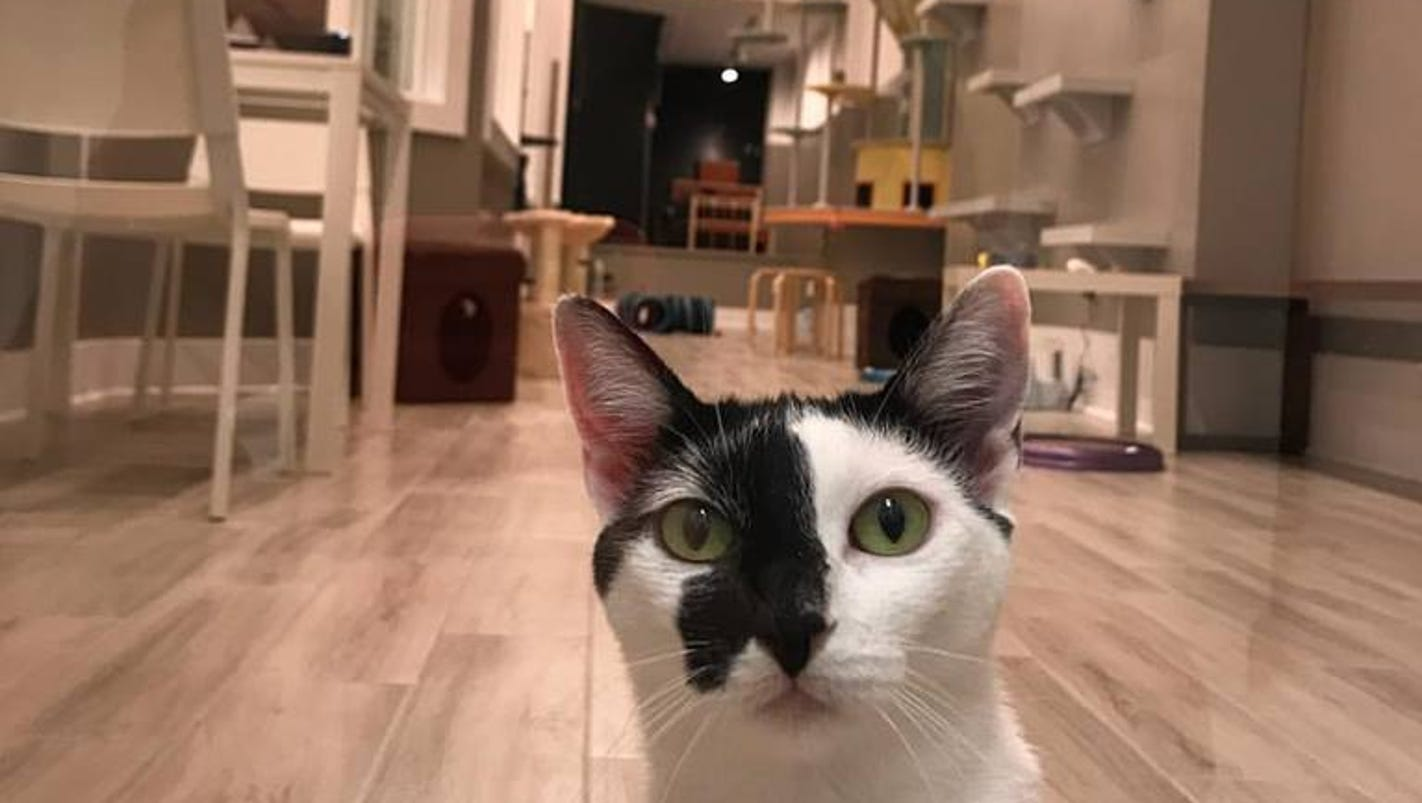Cat Cafe In Nj