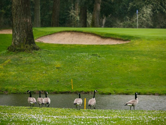 Heavy rain brings large puddles and higher water levels to the 18-hole semi-private course at Salem Golf Club on Tuesday, March 14, 2017. There are at least nine public courses within a 20-mile radius of downtown Salem, many of which have been swamped by the wettest December and February on record.