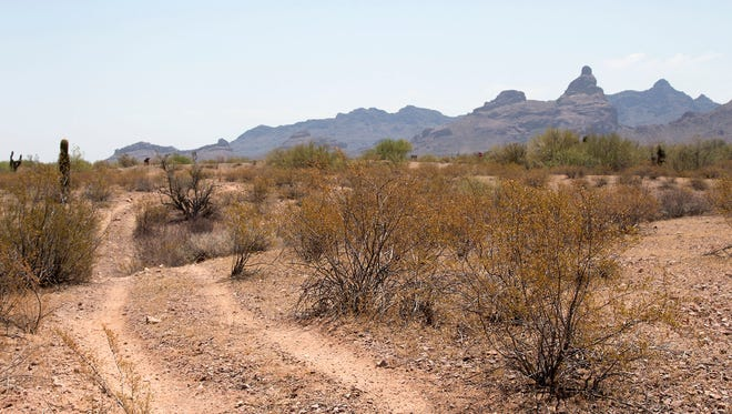 A vehicle route runs through designated wilderness at Organ Pipe Cactus National Monument near the Ajo Mountains Wayside parking lot in June.