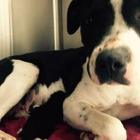 Pitty and Kitty together in Mercy Animal Clinic in Garland, Texas