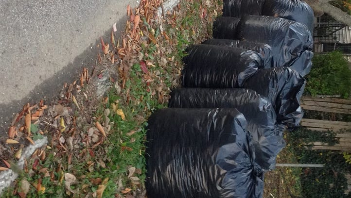 Plastic bags containing yard waste, before the ban.