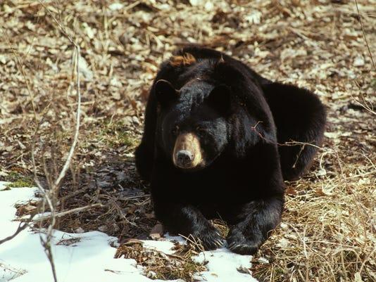 Black Bear_09.jpg