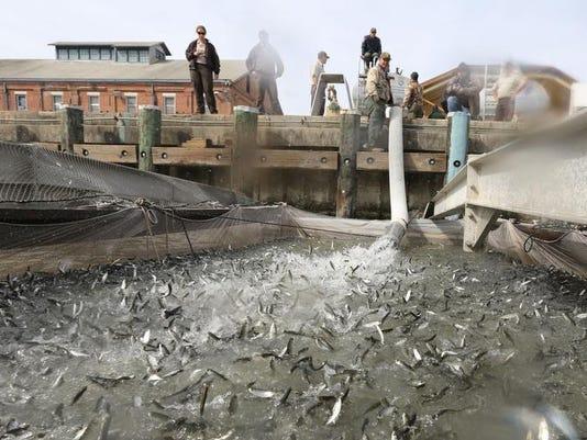 California Drought Salmon Rescue