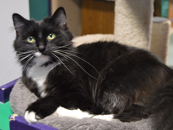 A 2-year-old female, Bee Bee  is super friendly and