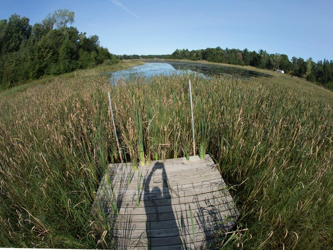 A dock on Long Lake surrounded by weeds comes up short